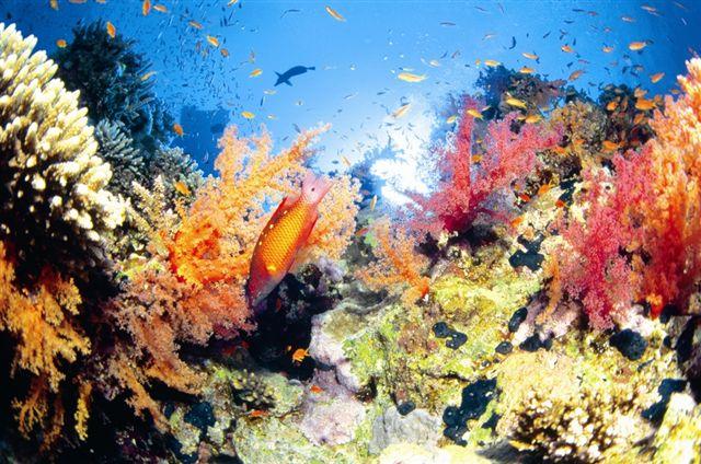 external image coral-reef.JPG