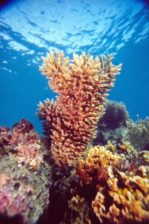 coral reef eilat